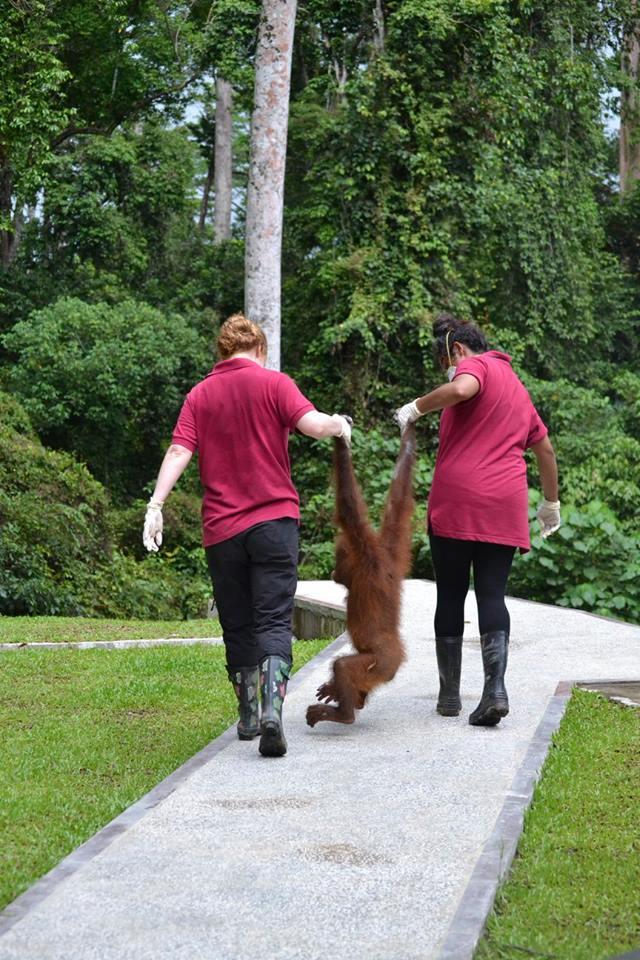 The rehabilitation centre that saves orangutans in the heart