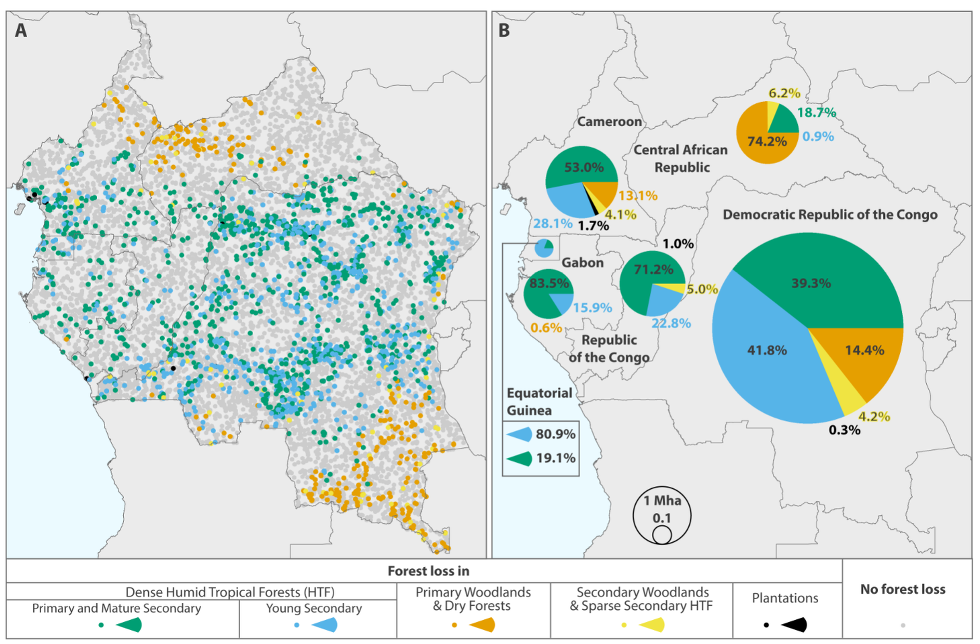 The Congo Basin Rainforest The Second Largest In The World