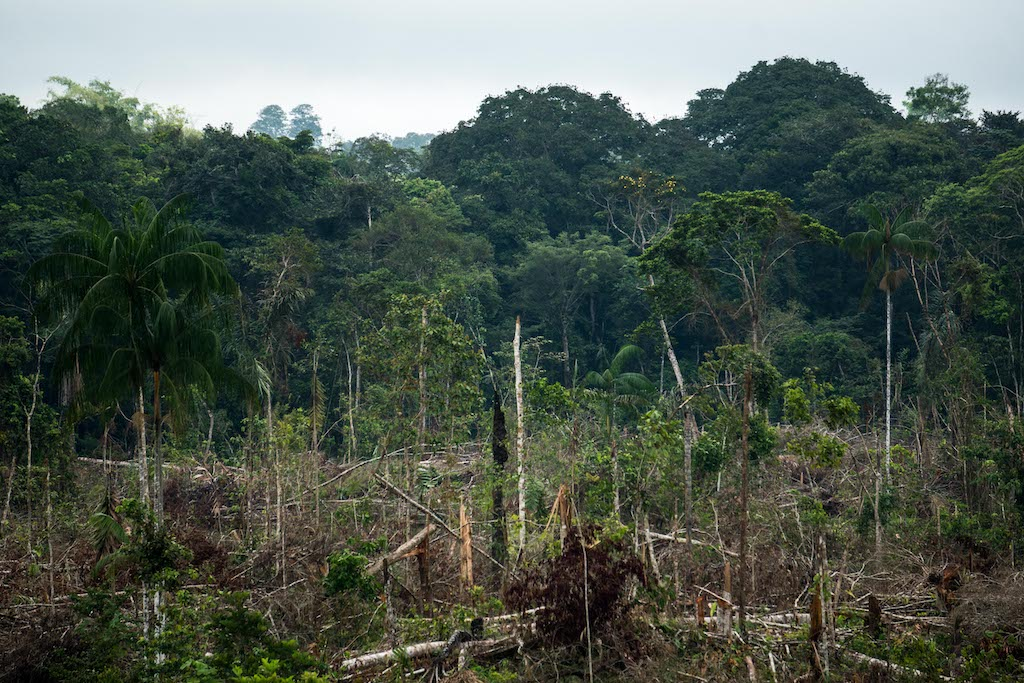 deforestation colombia farc amazon forest logging peace
