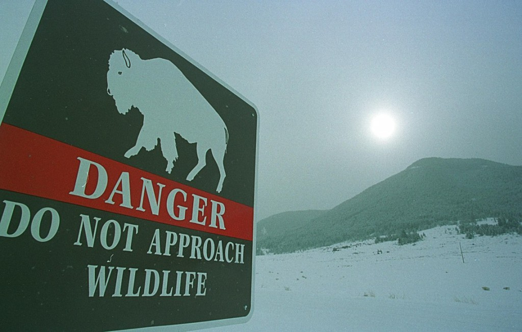 Tourists are warned of the dangers of approaching wildlife, but some choose not to listen
