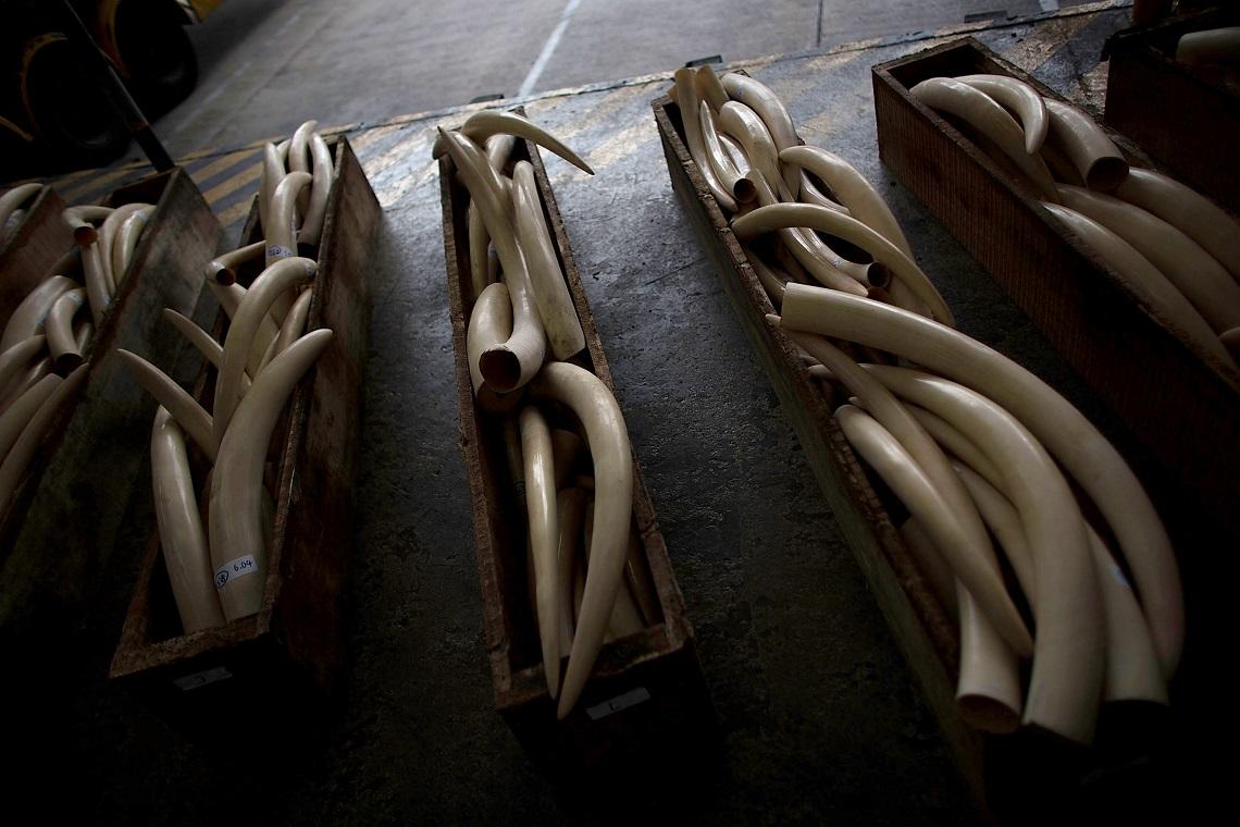 Ivory Trade Funds Terrorism Lifegate