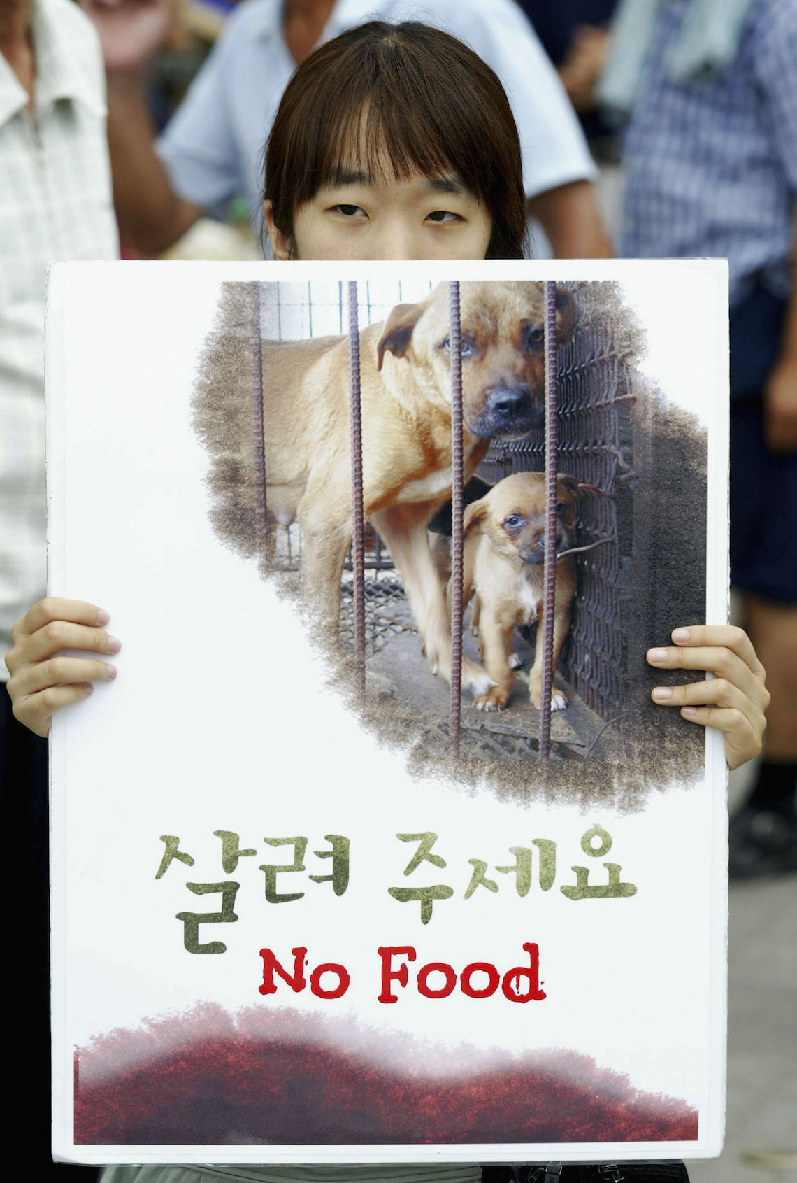 south korea dog meat