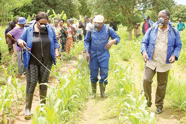 Minister of Agriculture Dora Siliya (left) taking part in spraying of armyworm worms © Zambia Daily Mail