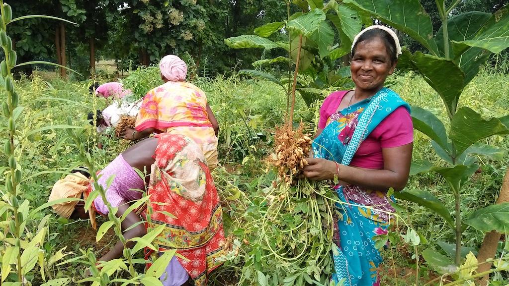 organic agriculture india