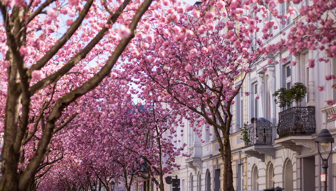 bonn trees flowers urban green