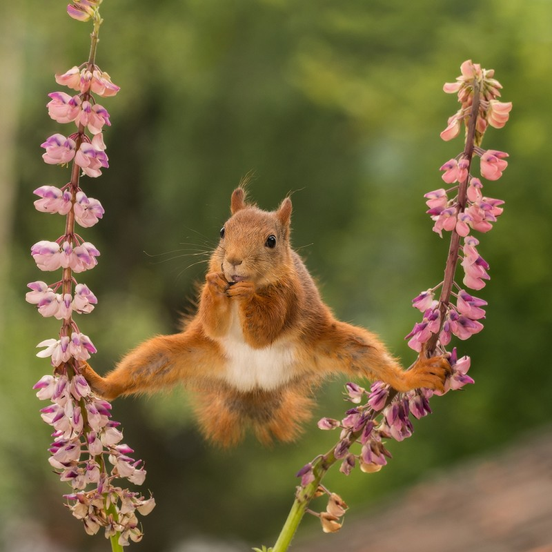 Nature At Its Funniest The Comedy Wildlife Photography Awards