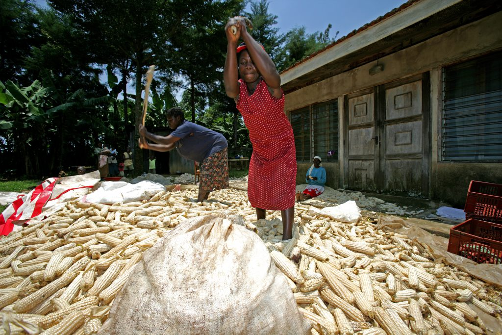 maize kenya women food agriculture