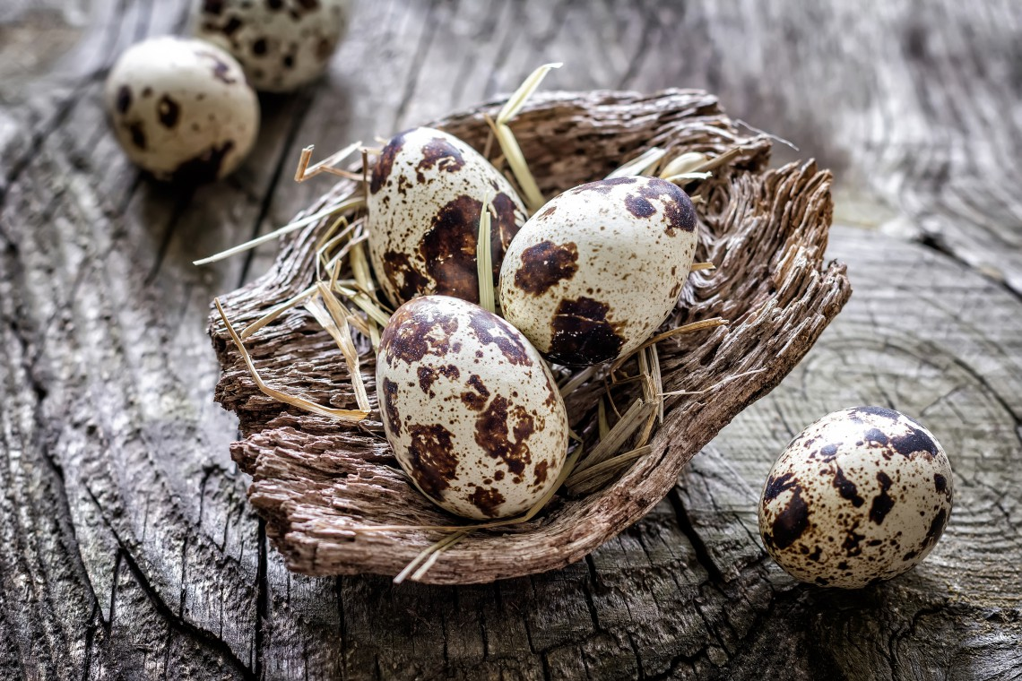rock partridge eggs allergies