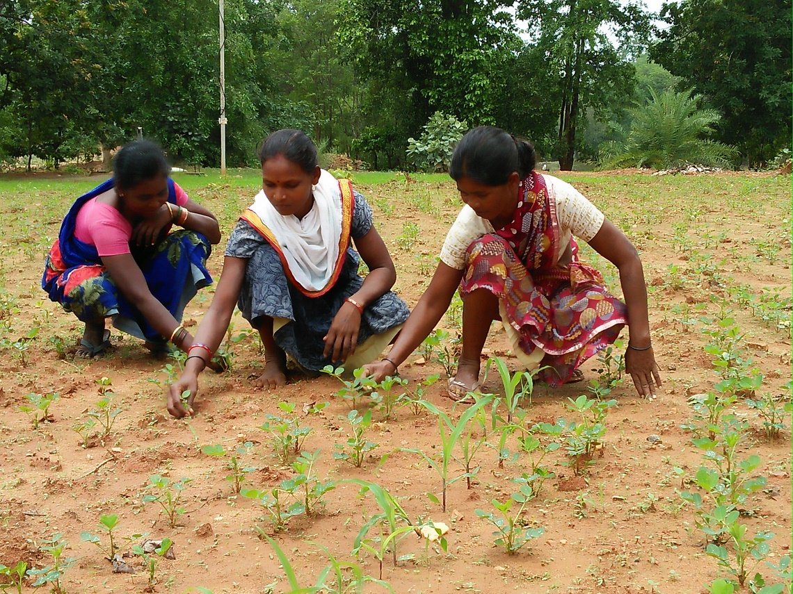 Organic farming is changing the lives of tribal peoples in