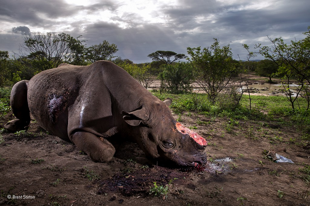 brent stirton wildlife photographer of the year