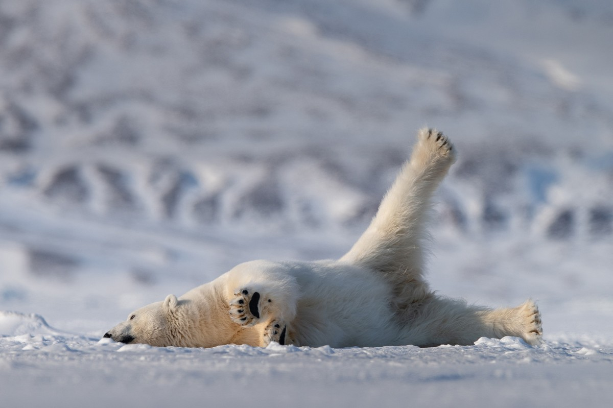 Nature At Its Funniest, The Comedy Wildlife Photography