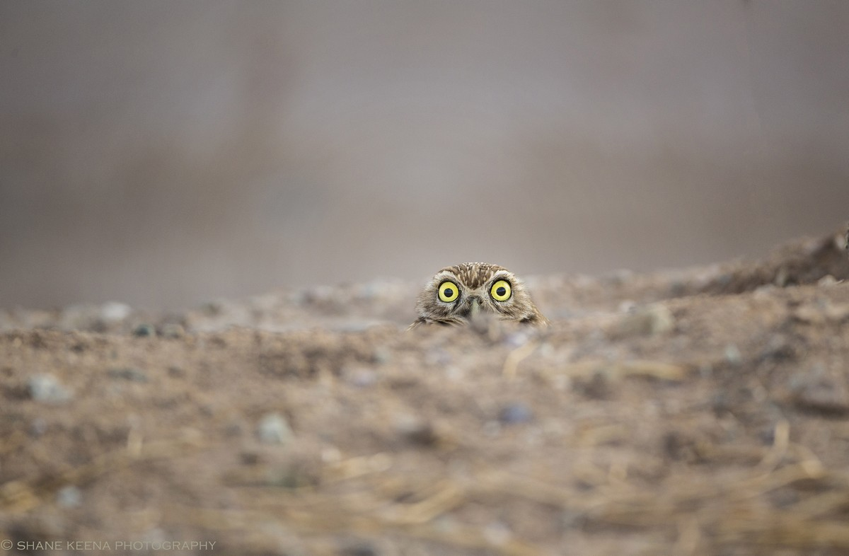 Image of: Bored Panda Nature At Its Funniest The Comedy Wildlife Photography Awards 2018 Lifegate Nature At Its Funniest The Comedy Wildlife Photography Awards 2018