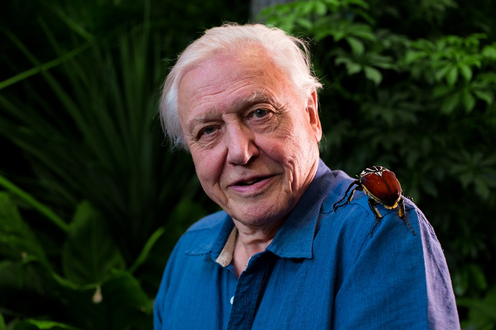 Television programme: Micro Monsters. Sir David Attenborough and