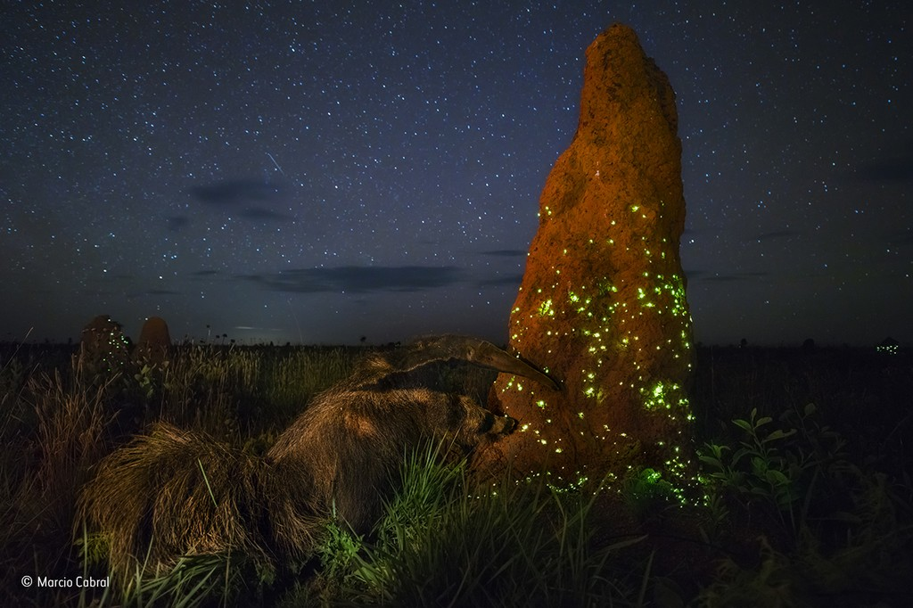termite light display Wildlife Photographer of the Year