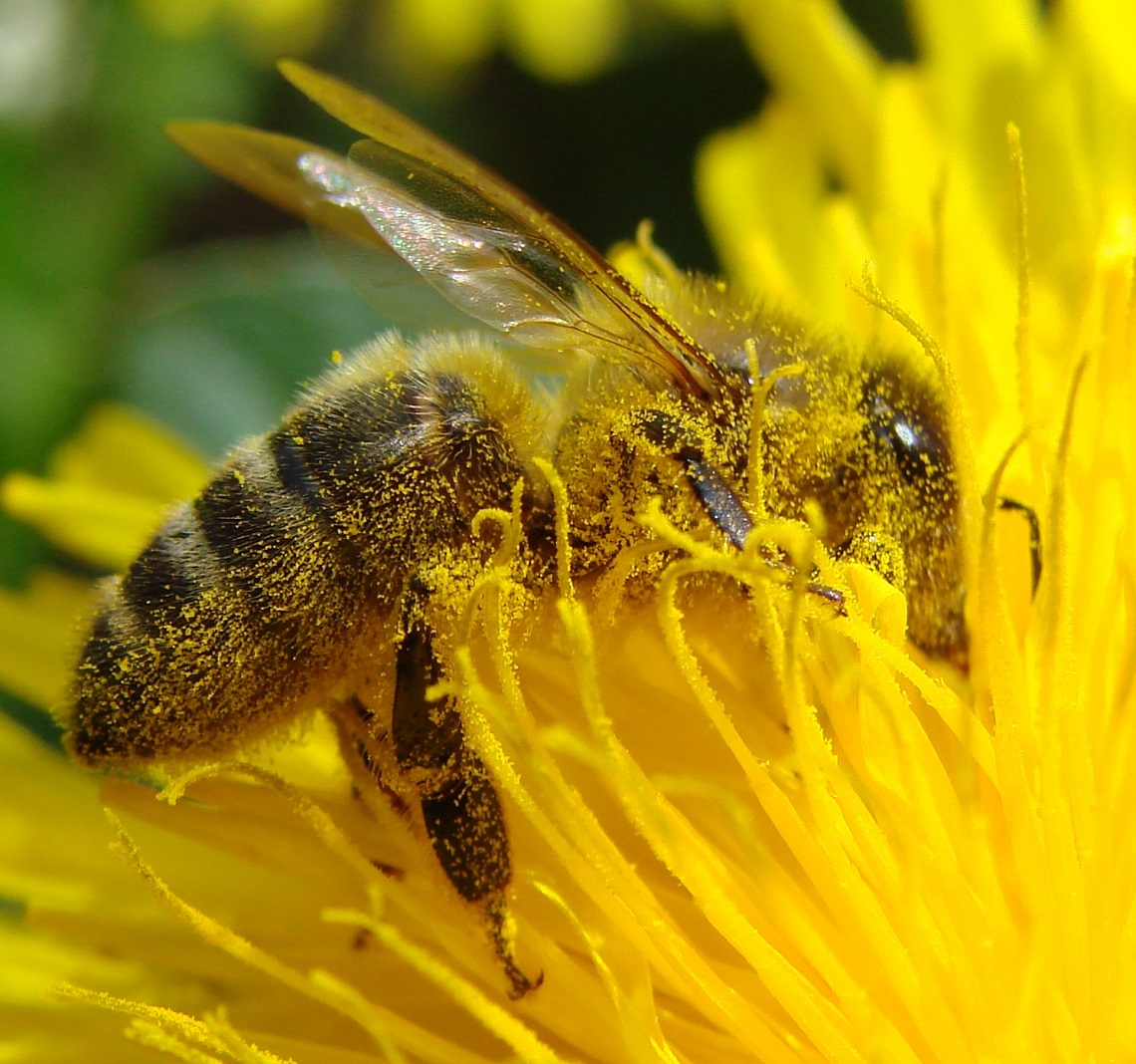a research on the decline of bee population and its impact on the world Joachim hagopian of global research published an informative article   decline in bee population effect humans and how would it affect us if.