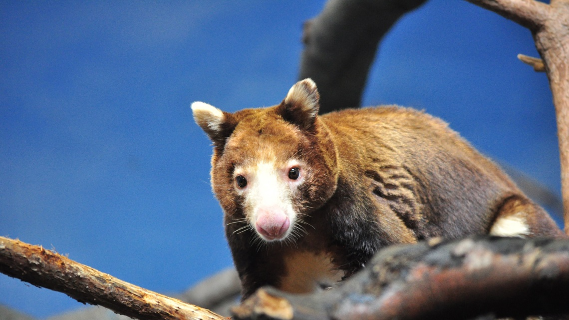 5 Animals That Choose To Live On Trees Lifegate