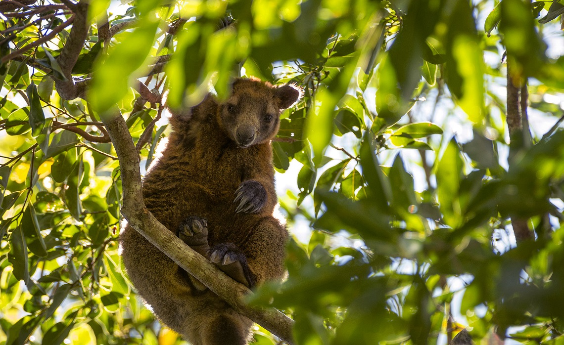 5 animals that choose to live on trees | LifeGate