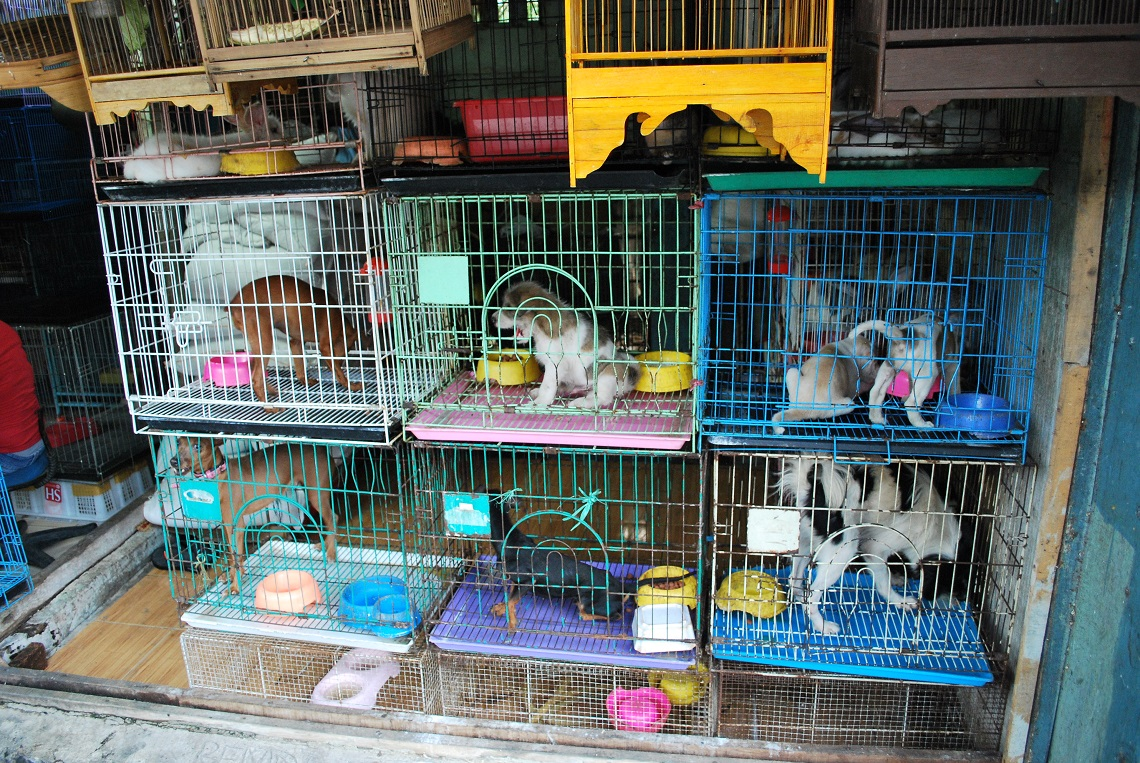 Boston bans pet shops from selling animals | LifeGate