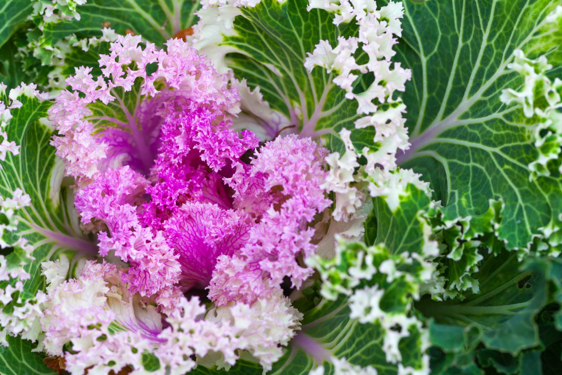 10 plants blooming in winter gardens lifegate - Fiori da giardino primavera estate ...