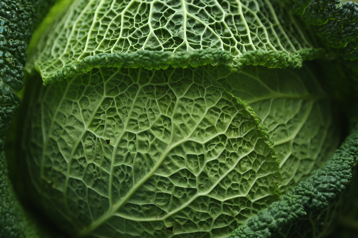 savoy cabbage memory