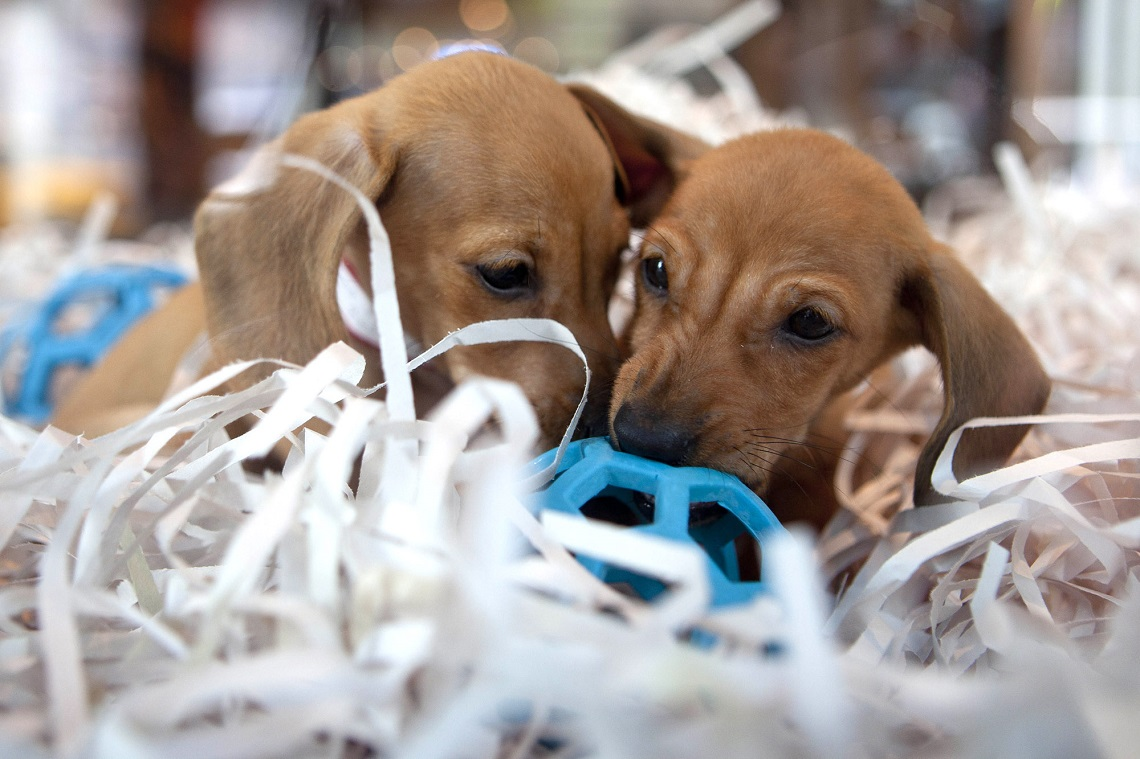 Boston Bans Pet Shops From Selling Animals Lifegate