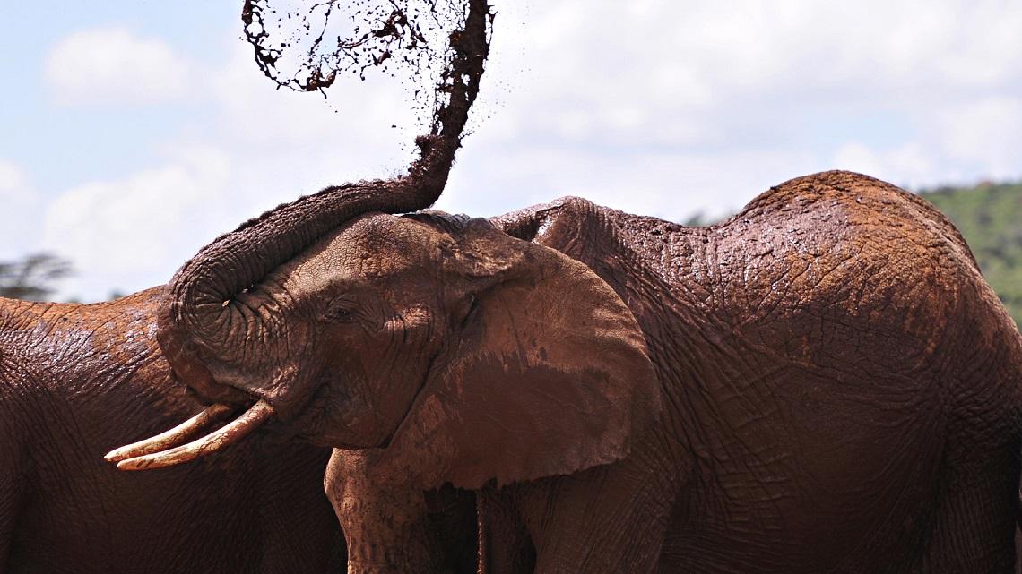 China bans its ivory trade   LifeGate