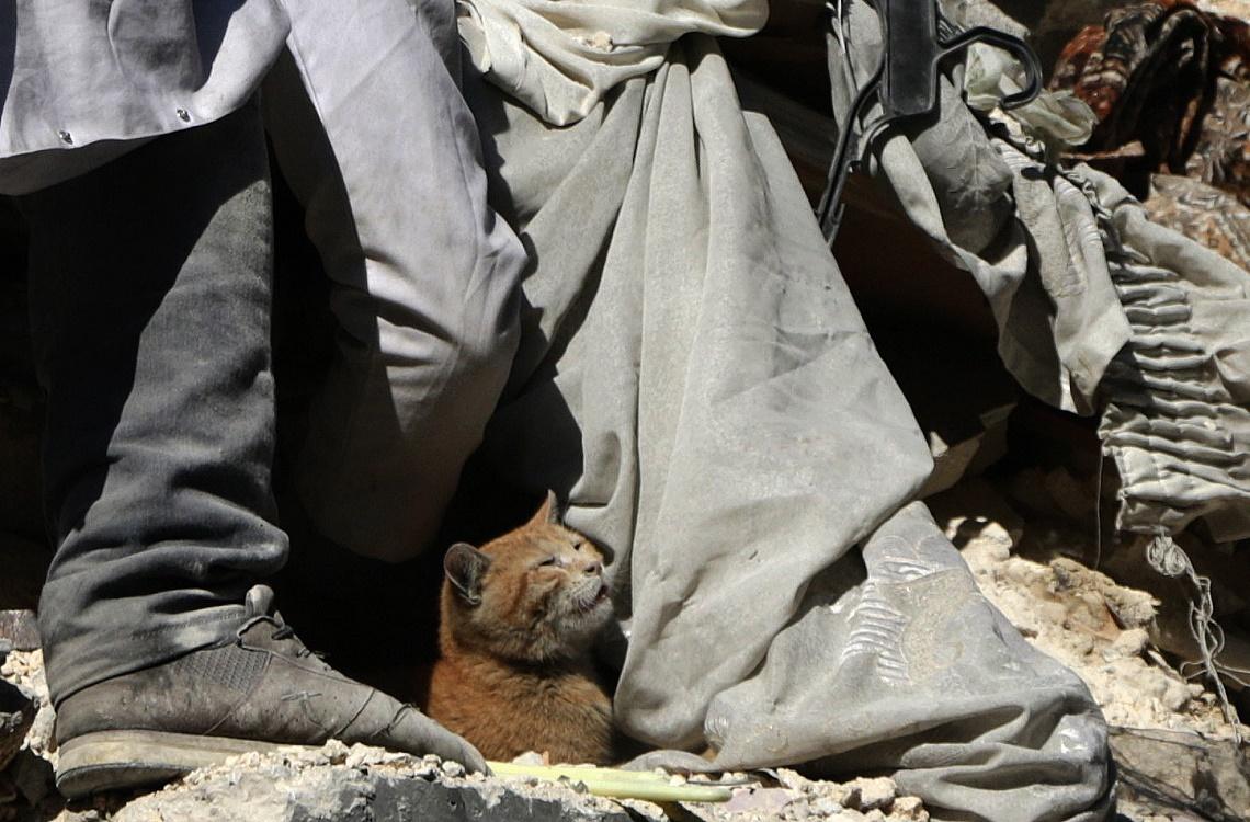 Gatto estratto dalle macerie da una casa di Aleppo