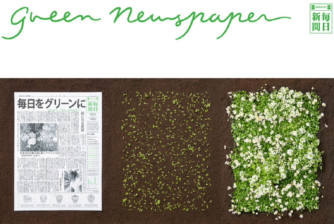 green newspaper pplant