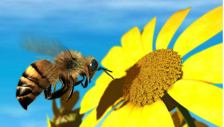 10 Plants To Attract And Feed Honeybees