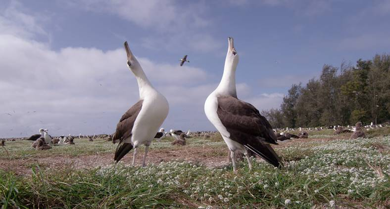 The Documentary Albatross Shows How We Need To Reconnect To Nature