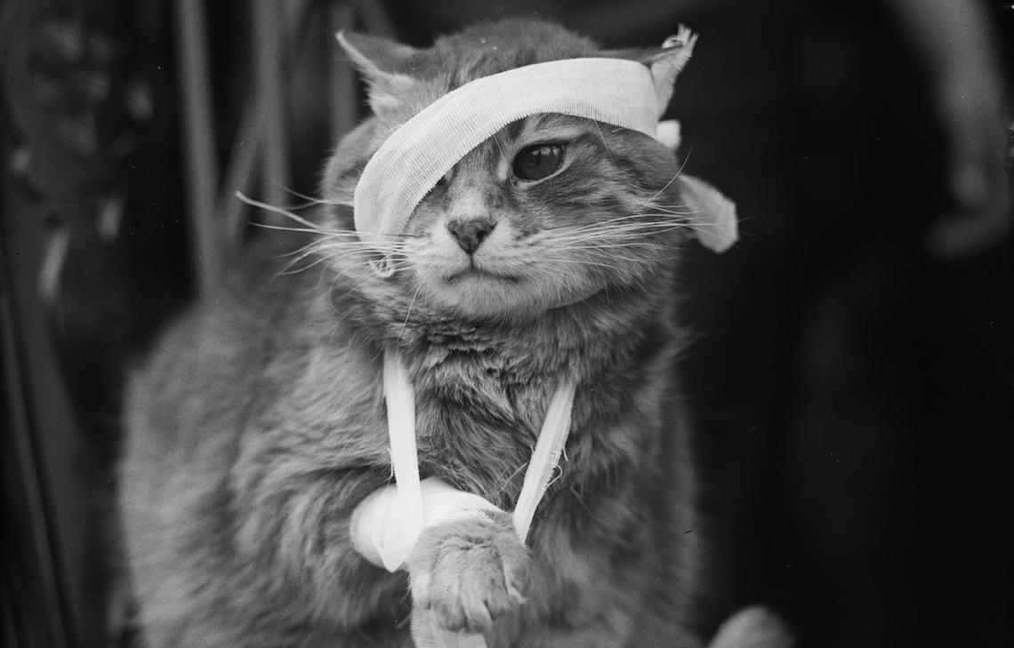 the cat ripper of croydon  a serial killer of felines