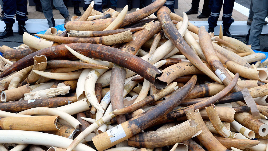 China bans its ivory trade
