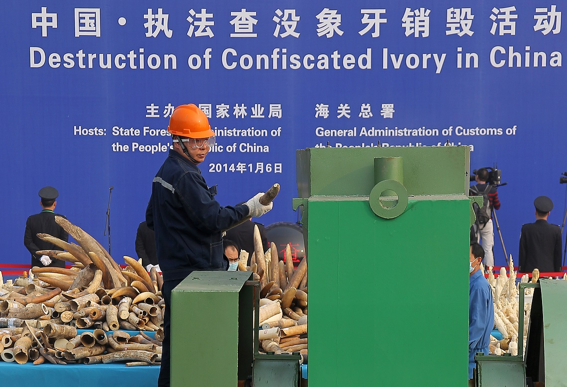 Ivory crush in Cina