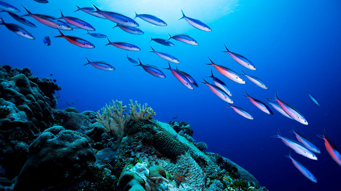 How ocean warming will kill fish, make them smaller and ...