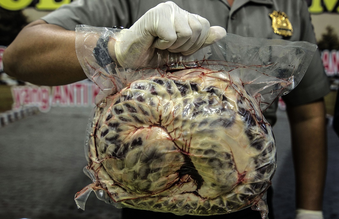 pangolin traditional chinese medicine