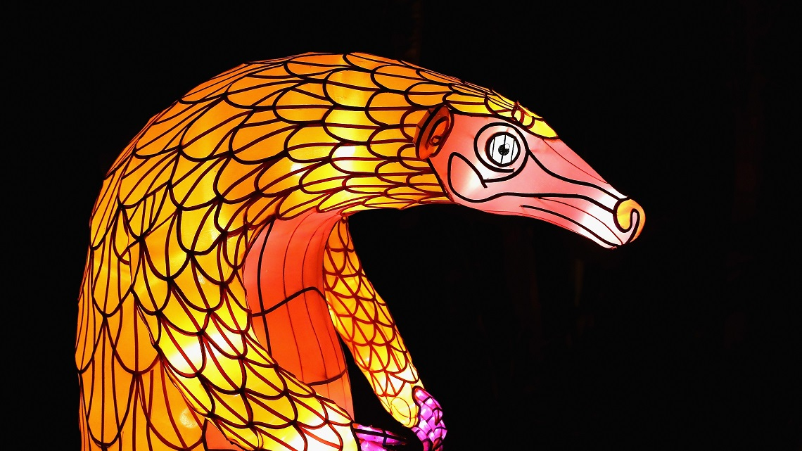 World Pangolin Day Lets Help Protect The Worlds Most