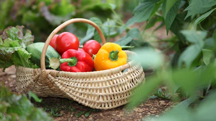 Fruits and vegetables in season by month: August