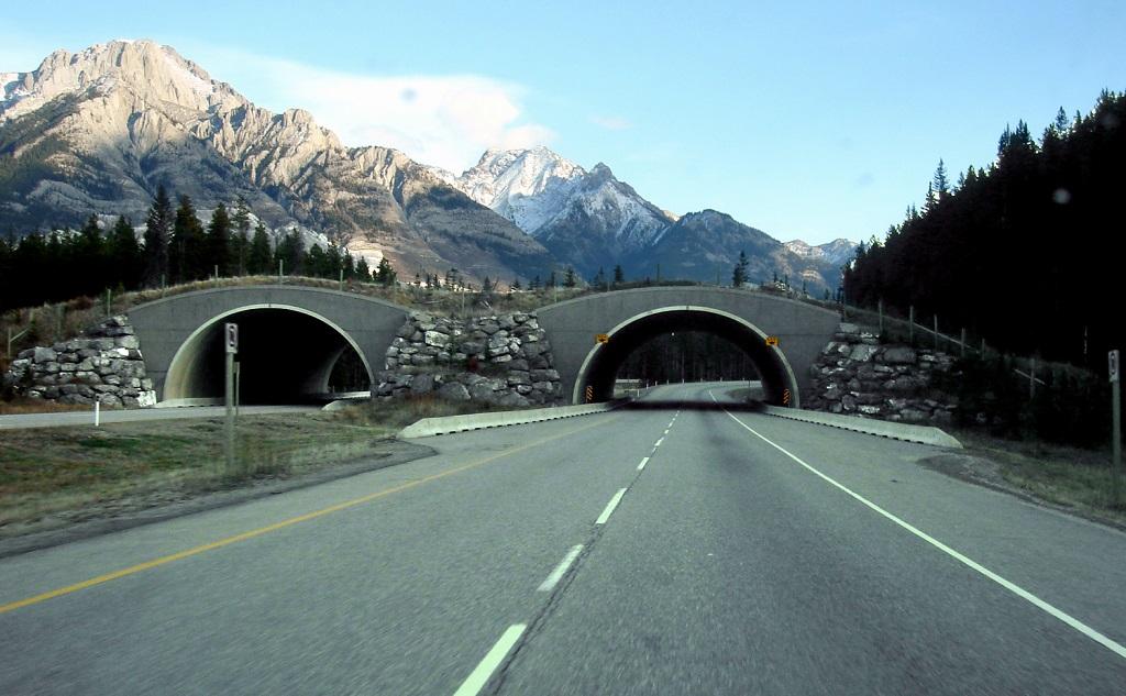 wildlife corridor canada