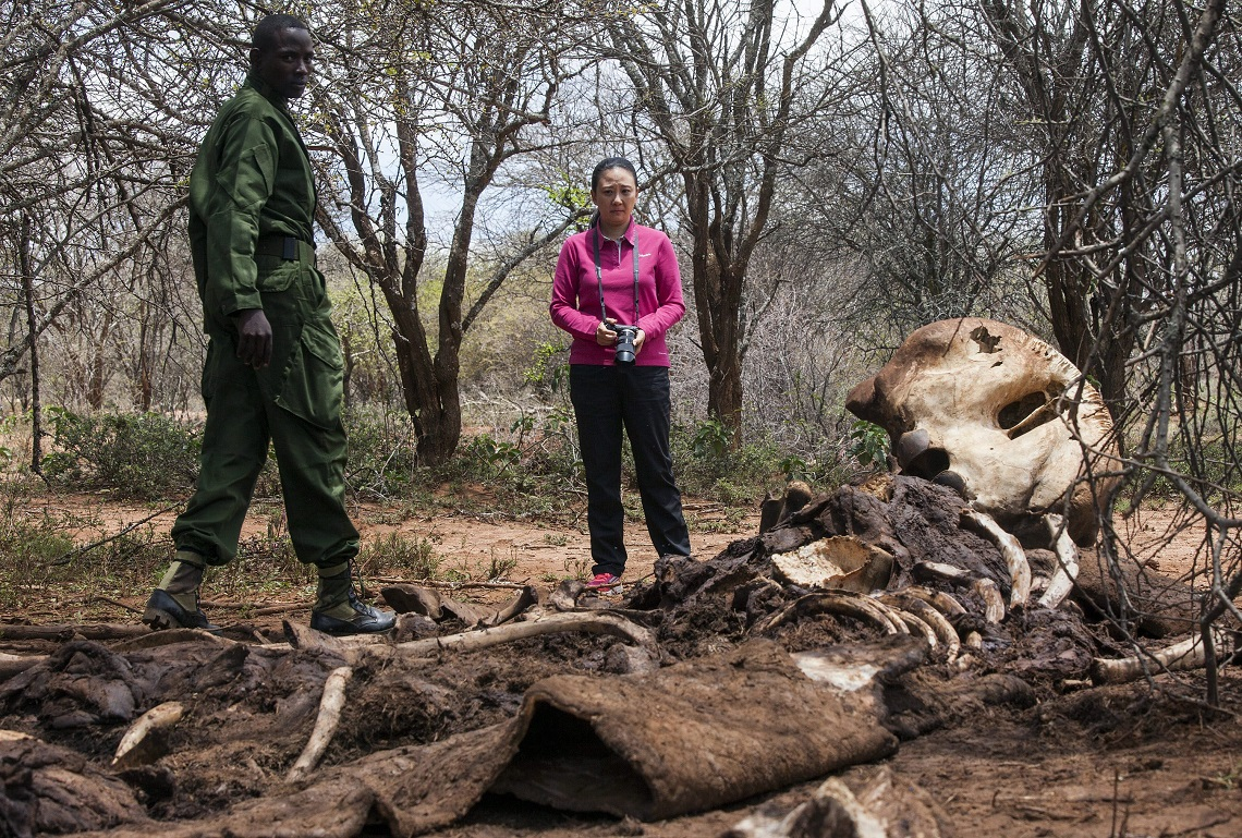 epa04399439 A handout photograph dated 06 September 2014 and made available by WildAid on 13 September 2014 shows Hong Kong Legislative Councillor Elizabeth Quat (R) and a ranger from the Samburu Trust (L) standing by the carcass of a large dead bull elephant killed by poachers on 15 July 2014 to get at their ivory tusks, in Oldonyo Nyiro, northern Laikipia, Kenya. A recent report by Save The Elephants suggests that 100,000 elephants were killed for their tusks in the last three years to feed a surging demand for ivory products, largely in Asia. WildAid, Save The Elephants, Stop Ivory, African Wildlife Foundation and the Northern Rangelands Trust are all working with Hong Kong Legislator Elizabeth Quat to support her legislative efforts to bring about a domestic ivory trade ban in the ex-British colony, and to raise up levels of public awareness on the links between the illegal killing of elephants, terrorism, and the consumption of ivory products in Hong Kong and China.  EPA/ALEX HOFFORD/WILDAID /HANDOUT  HANDOUT EDITORIAL USE ONLY/NO SALES