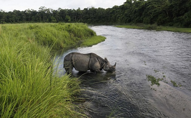 rinoceronte nel Chitwan National Park