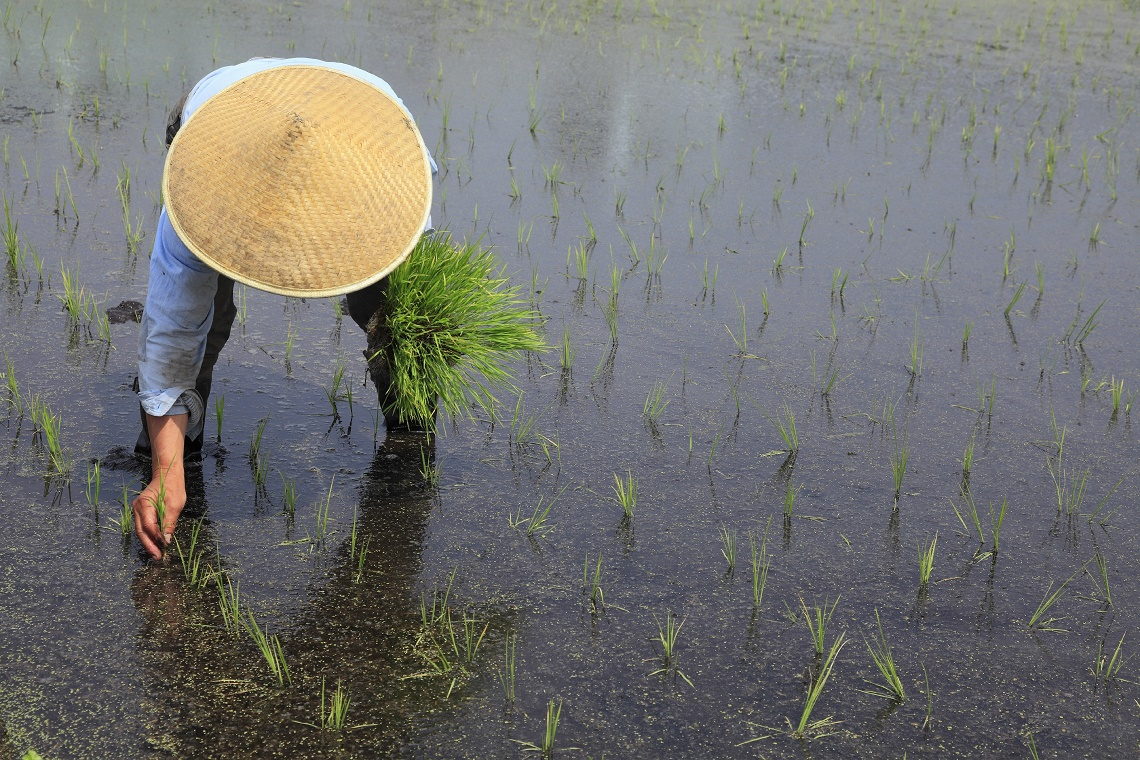 Rice farmer in Japan