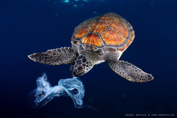 tartaruga mangia busta di plastica