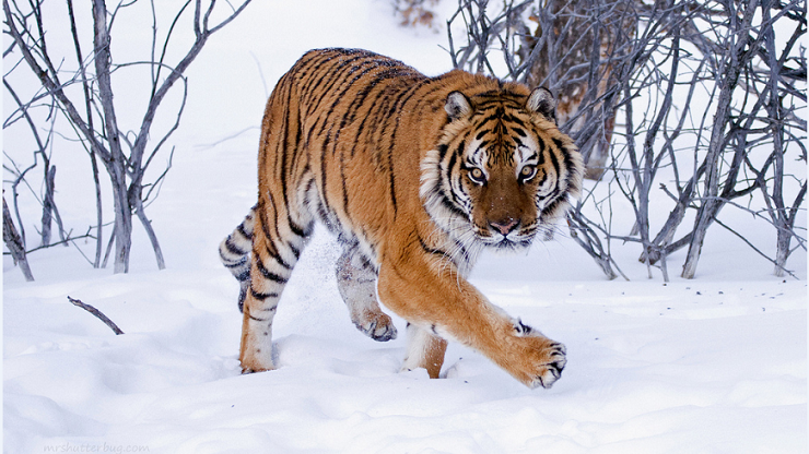 Rise Of The Big Cats