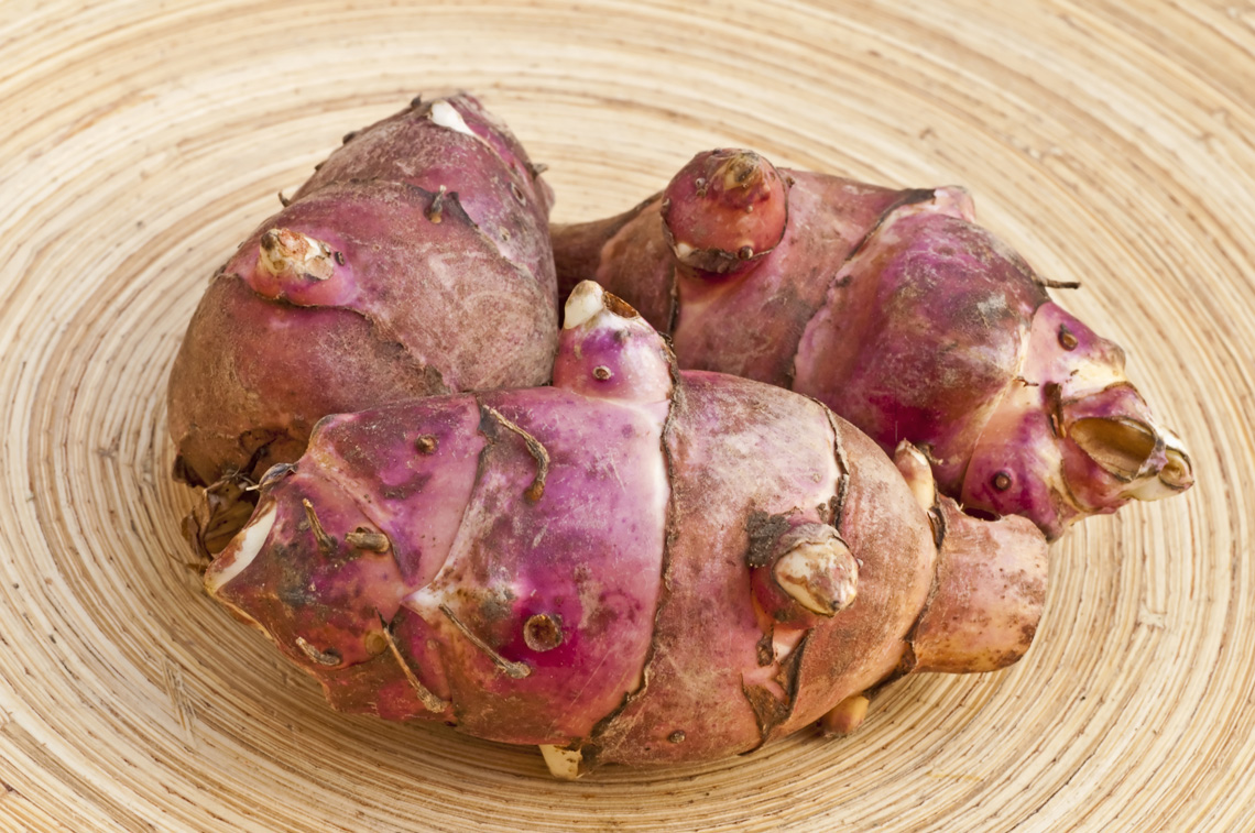The Jerusalem artichoke, when cooked, tastes like an artichoke