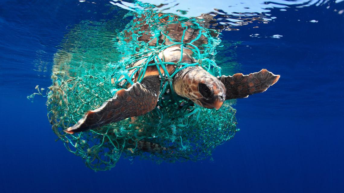 underwater plastic photographer winners